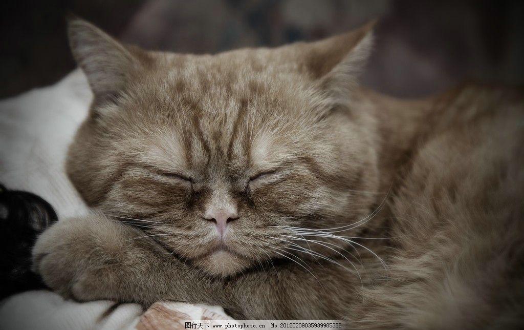 可爱小猫图片,猫咪 宠物 猫科动物 虎皮猫 家禽家畜