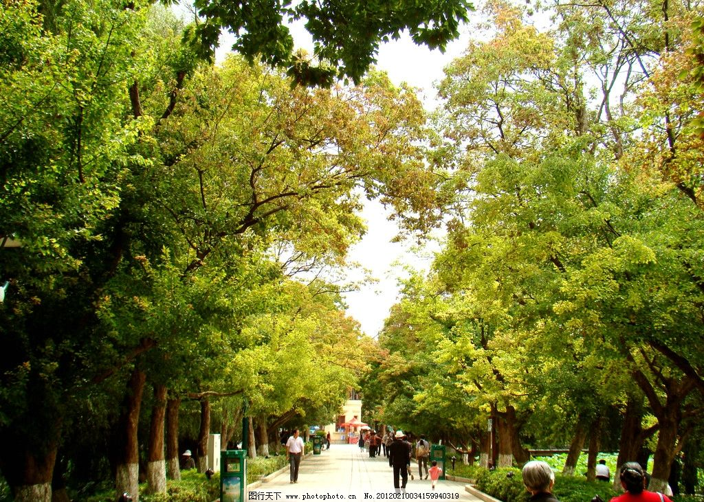 生态公园 公园 园林 园艺 大树 树林 树荫 道路 生态 自然 自然风景