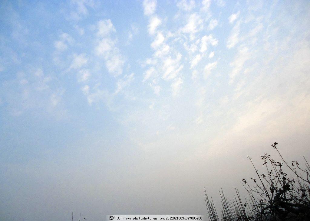 蓝天白云 浅蓝色 天空 一排排 晚霞 树梢 摄影