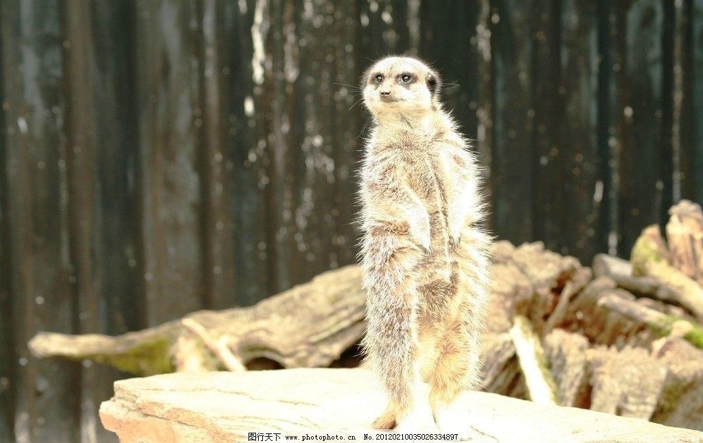 小水獭 水塔 水獭 可爱 野生 动物 珍贵 野生动物 生物世界 摄影 72