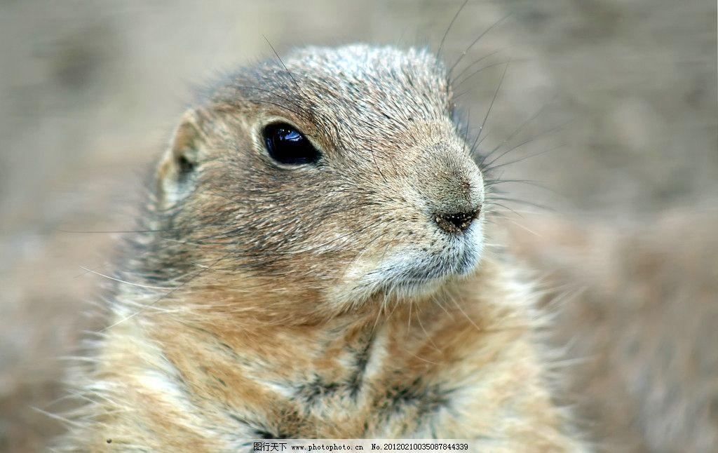 小松鼠 水塔 水獭 可爱 野生 小动物 野生动物 生物世界 摄影 300dpi