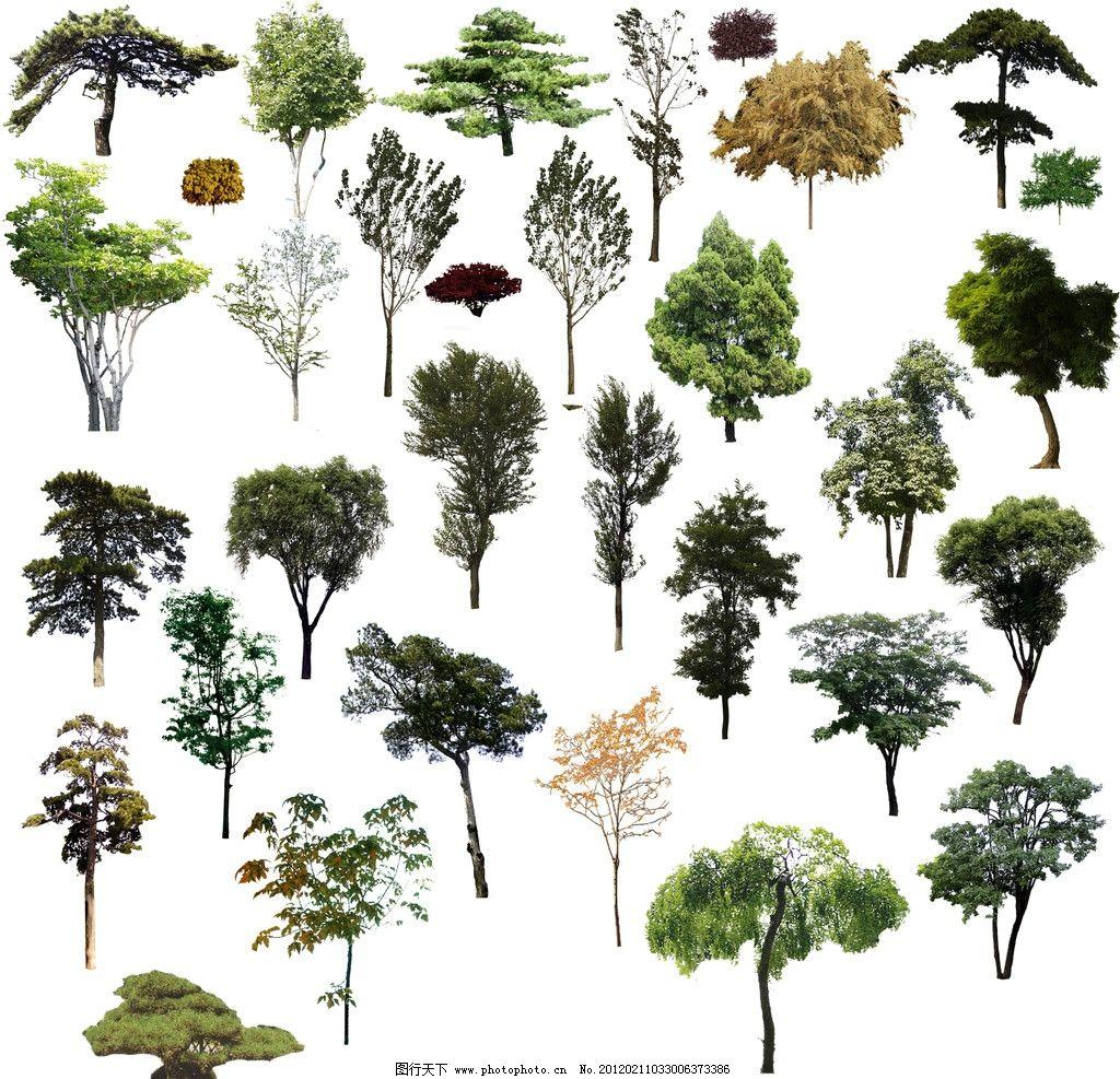 树木 树 树林 松树 柏树 杨树 树叶 树枝 山树 小树 大树 psd分层素材