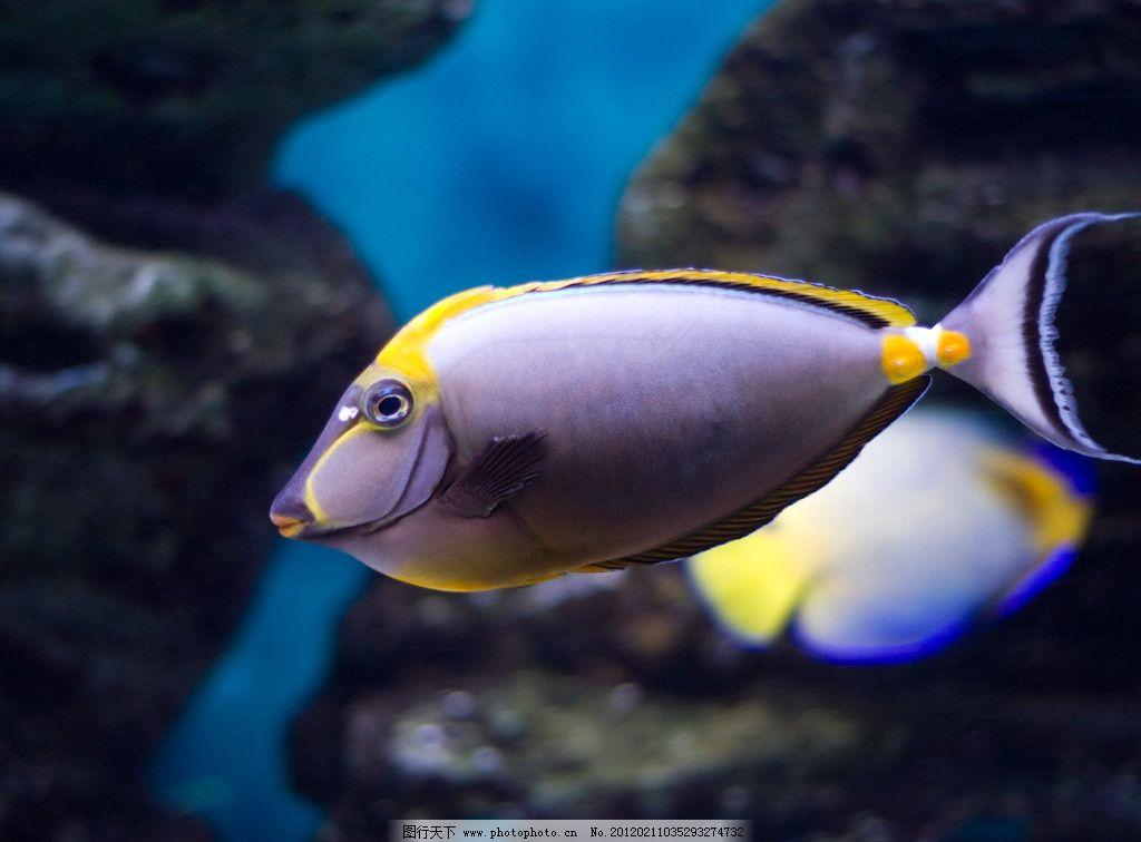 海底小丑鱼 海底 大海 海洋 小丑鱼 深海鱼 鱼类 生物世界 摄影 240