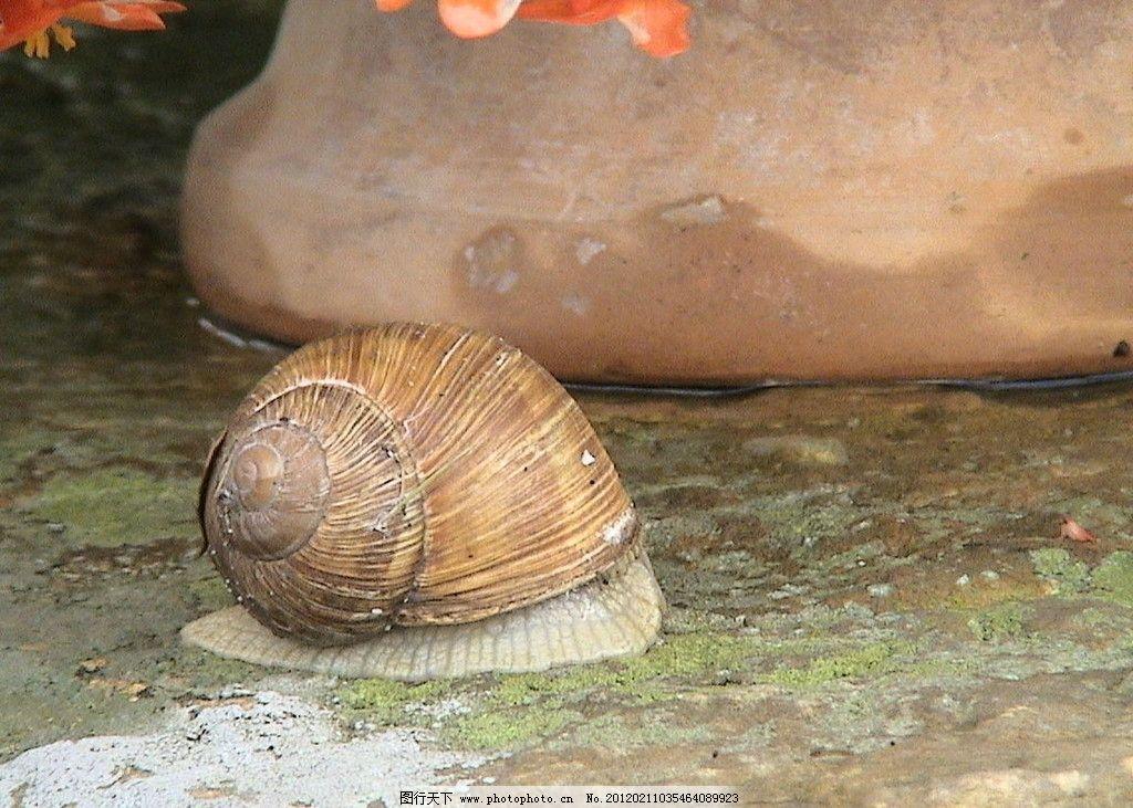 蜗牛 动物界 软体动物 腹足纲 直腹足亚纲 昆虫 生物世界 摄影 72dpi
