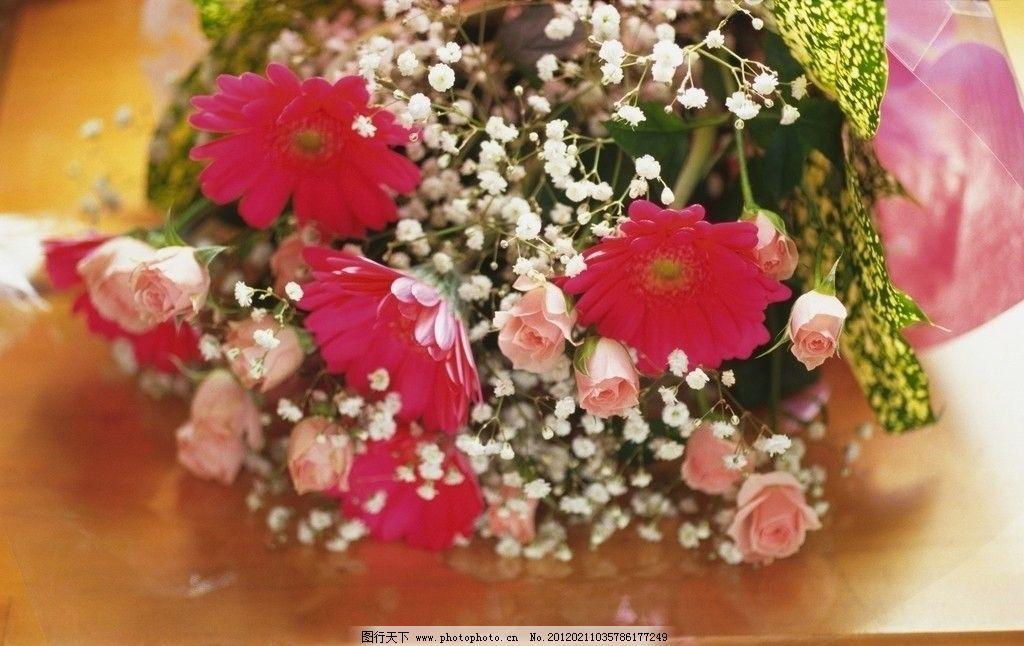 高清鲜花摄影图片