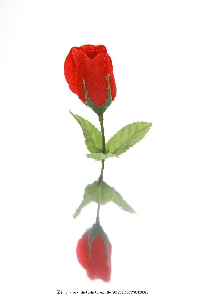 玫瑰花 红玫瑰 爱情 花朵 鲜花 花草素材 花草 生物世界 摄影 72dpi图片