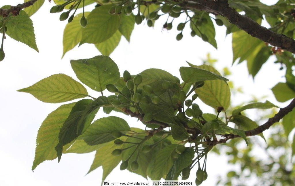 自然风景 植物 树叶 绿叶 树木树叶 生物世界 摄影 72dpi jpg