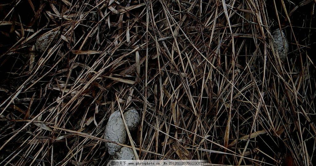狼路标 狼遗 野生动物 生物世界 摄影 72dpi jpg