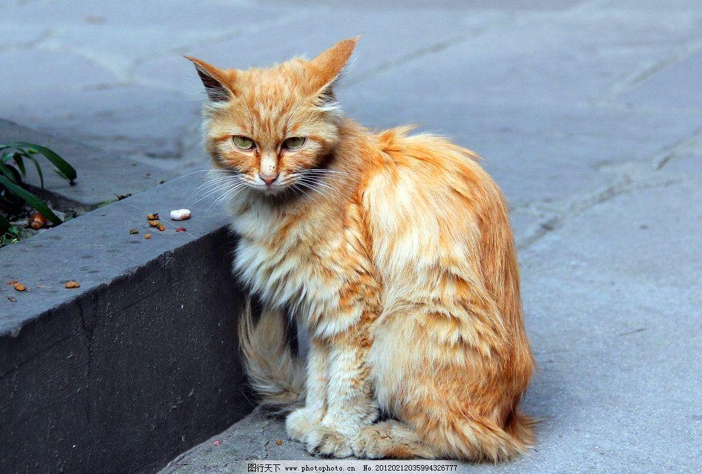 小猫 动物 动物摄影 生物世界 家畜 猫 猫儿 小动物 宠物 家禽家畜