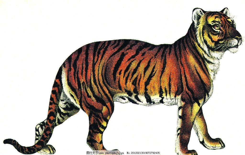 老虎 动物 绘画书法 文化艺术 设计 270dpi jpg