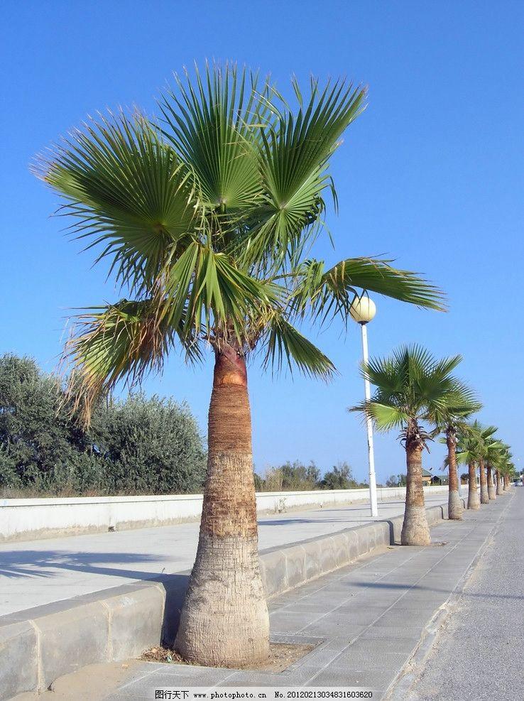 热带 马路 道路 椰子树 植物 大树 风光方面素材 山水风景 自然景观