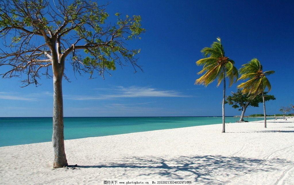 海边沙滩风光 大海 树木 大树 海水 风光方面素材 山水风景 自然景观