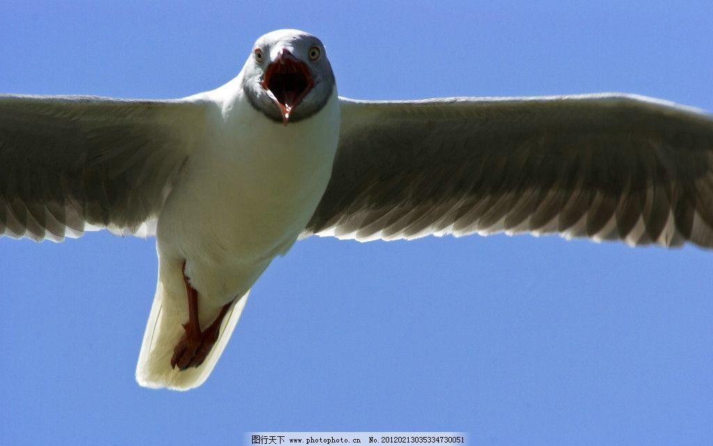 壁纸 动物 鸟 鸟类 1024_640