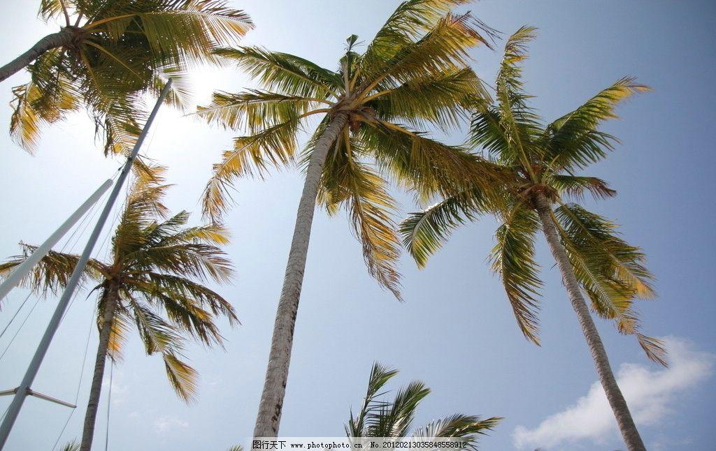 椰林 椰子树 天空 阳光 海边 热带 树木树叶 生物世界 摄影 72dpi jpg