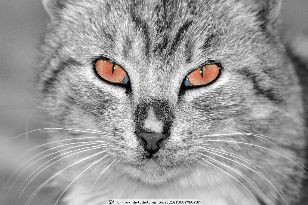 可爱小猫 小猫 猫咪 宠物