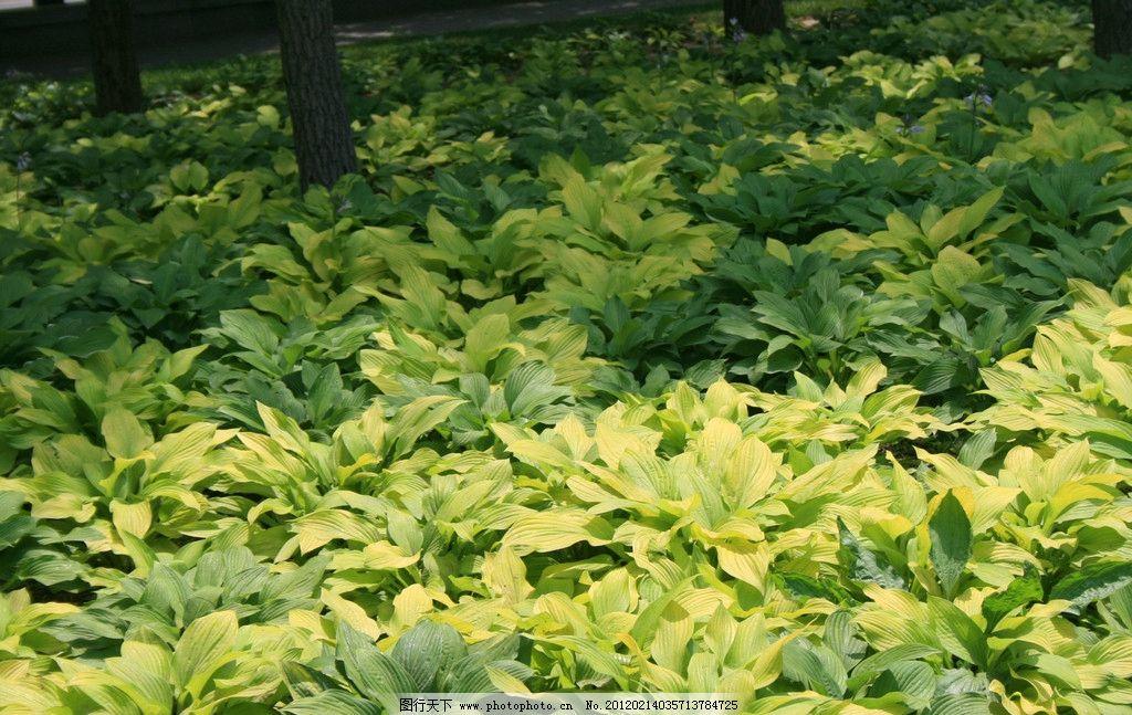 壁纸 成片种植 风景 植物 种植基地 桌面 1024_647
