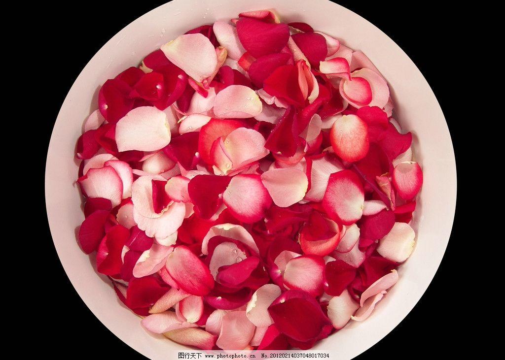 花瓣足浴 花瓣 花朵 鲜花 花瓣浴 小花 玫瑰花 生活素材 生活百科