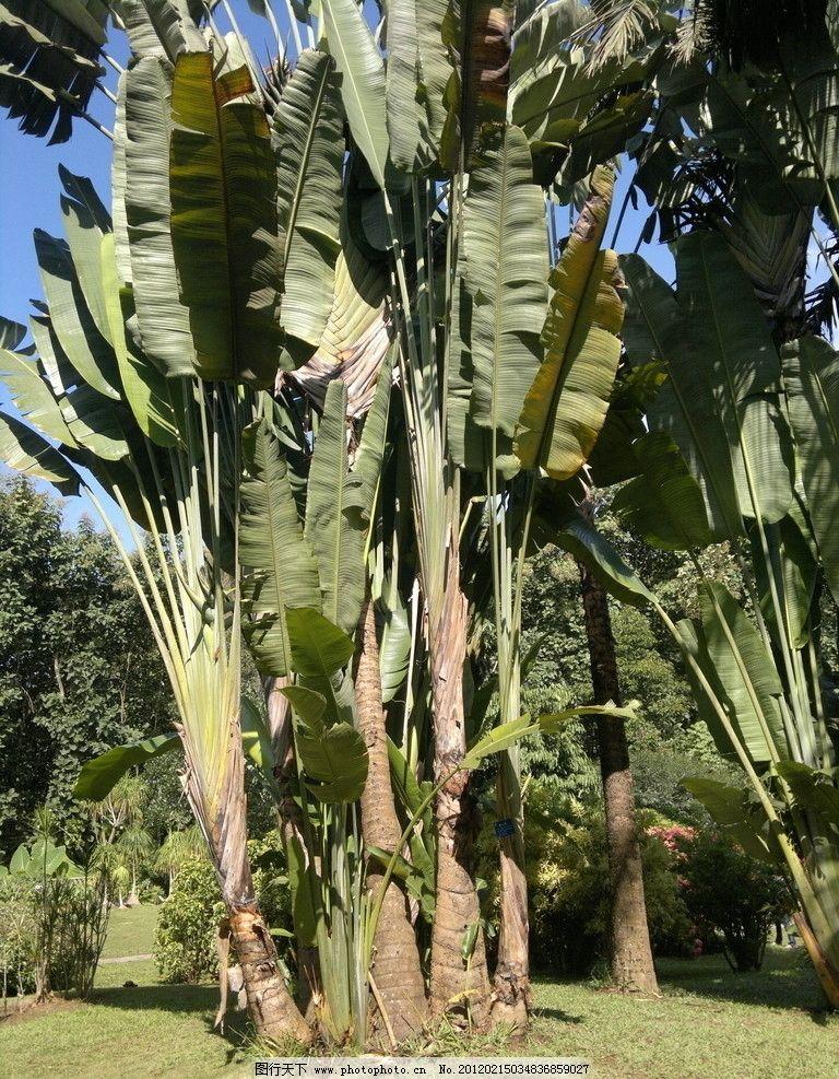 西双版纳 热带植物园 森林 自然风景 自然景观 摄影 300dpi jpg