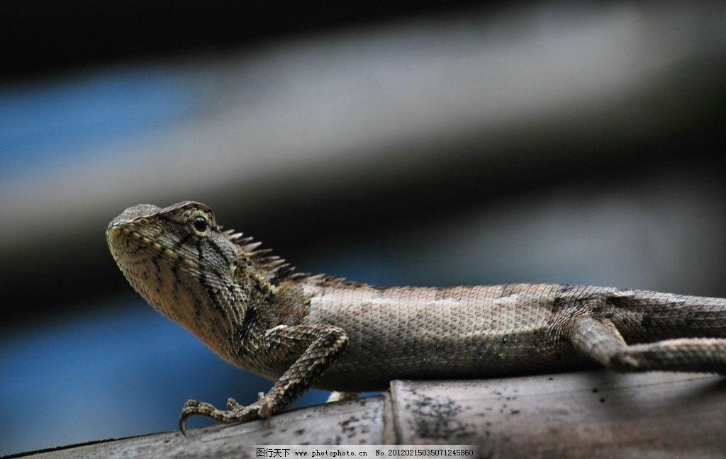 蜥蜴 野生动物 生物世界