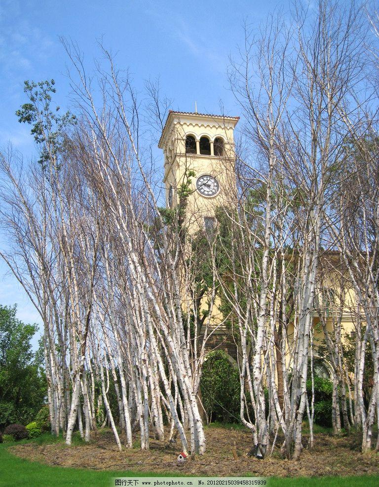 钟楼 白桦林 售楼处 建筑外景 摄影 欧式 园林 树林 高清 别墅 建筑