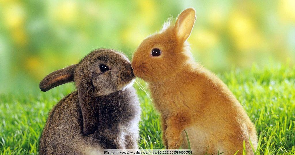 动物之间的交流