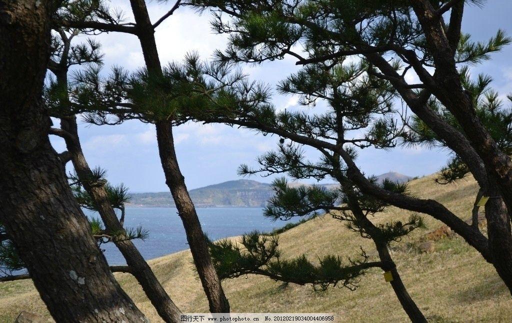 摄影 旅游 国外 韩国 济州岛 自然风景 大长今拍摄景区 大海 松树