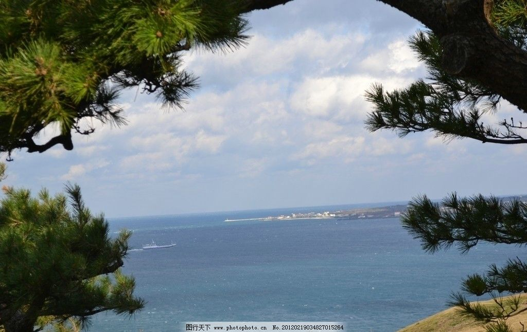 韩国大海 摄影 旅游 国外 济州岛 自然风景 火山 日出峰 松树