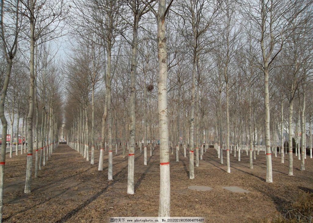 林木景观图片