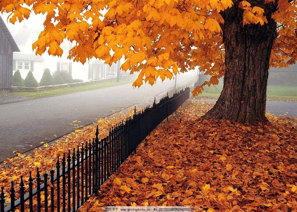 树叶 秋天 金秋 落叶 黄叶 街头树木 童话 秋天晨景 树木树叶 生物