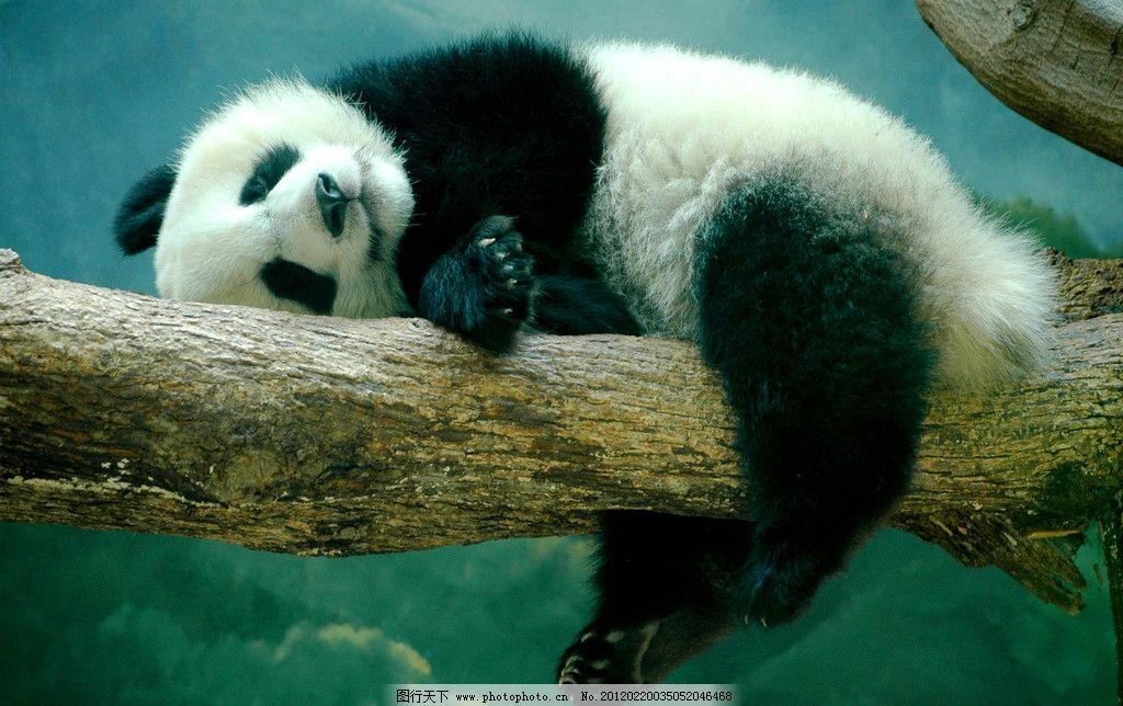 中国的国宝动物