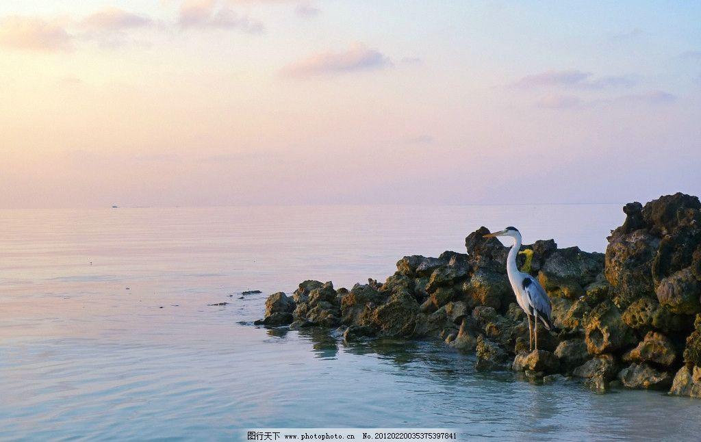 白鹭 白露 大海 海边 日落 日出 朝霞 晚霞 彩云 火烧云 蓝天