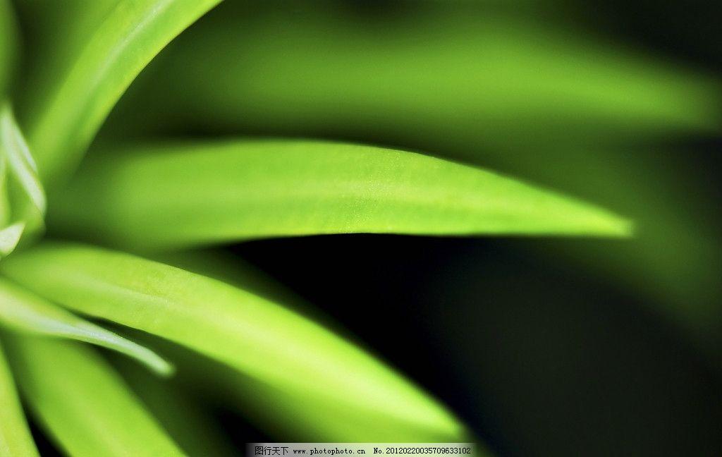 绿色植物 背景桌面 绿叶 草 240dpi jpg