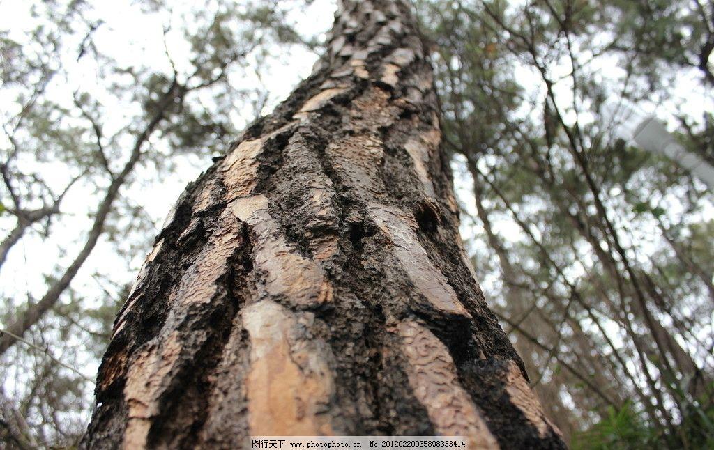 树木 纹理图片