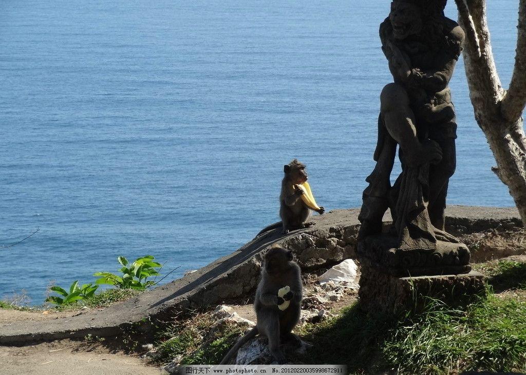 海边猴子 大海 猴子 海边 动物摄影 家禽家畜 生物世界 摄影 72dpi
