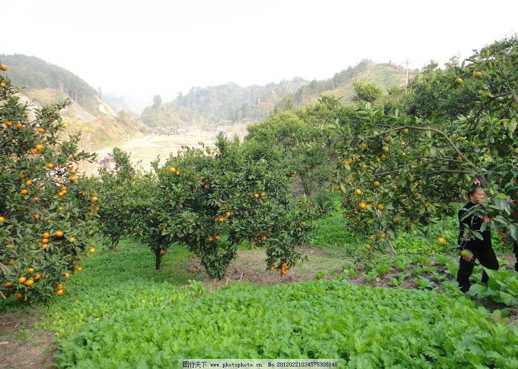 农家果园图片