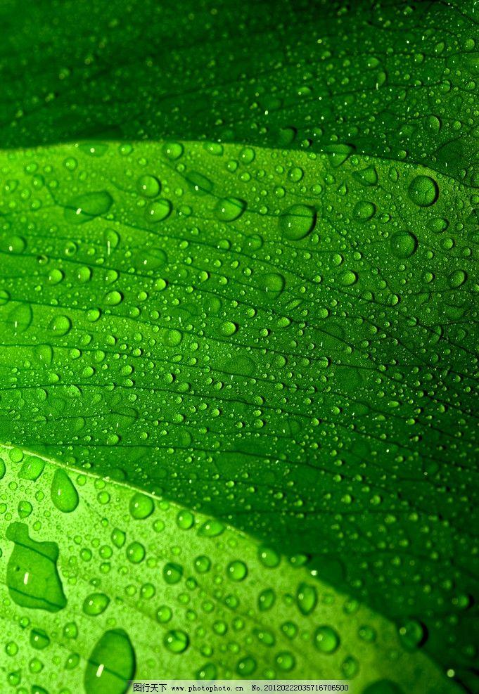 绿色背景 高清壁纸 绿色 春天 春季 绿叶 露水 水珠 露珠 树木树叶