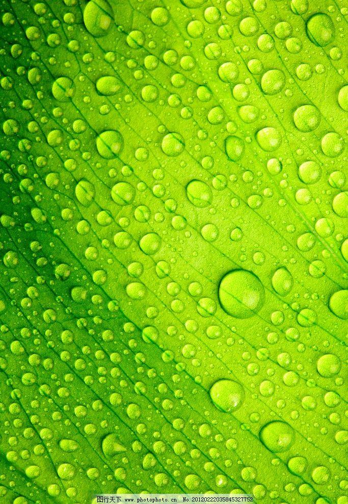 高清树叶 绿色背景 高清壁纸 春天 春季 绿叶 露水 水珠 露珠