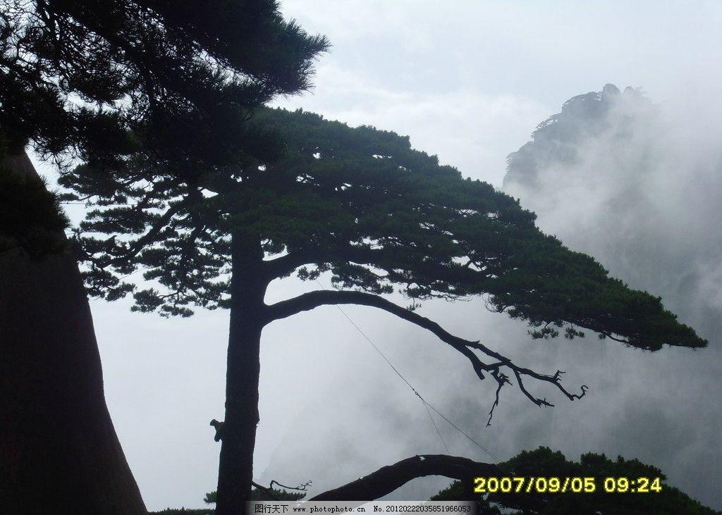 迎客松 黄山 雾里松 欢迎 树木树叶 生物世界 摄影 96dpi jpg