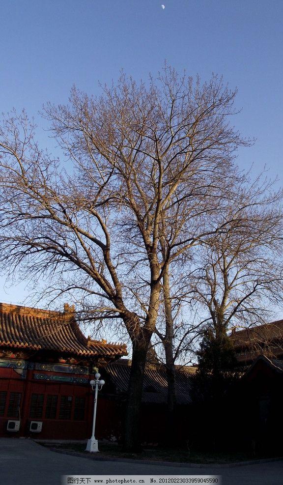 古树 中山公园 公园风景 蓝天 月亮 树木 树枝 枝桠 冬日风景