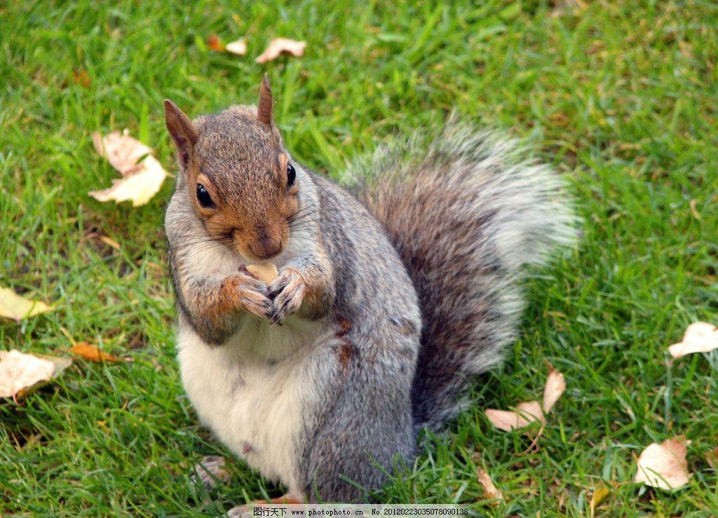 松鼠 动物 可爱 可爱动物 野生动物 生物世界 摄影 180dpi jpg