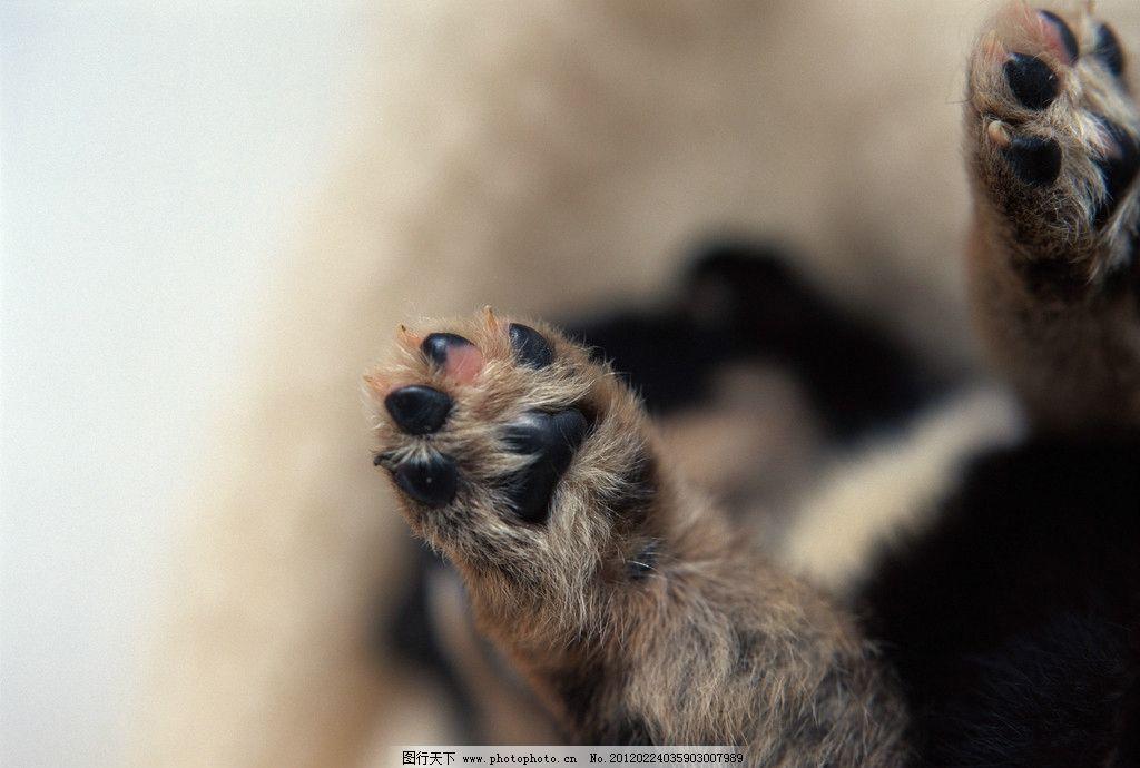 可爱动物们 可爱 动物们 小狗 黑白双煞 黑白小狗 黑小狗 白小狗 毛毯