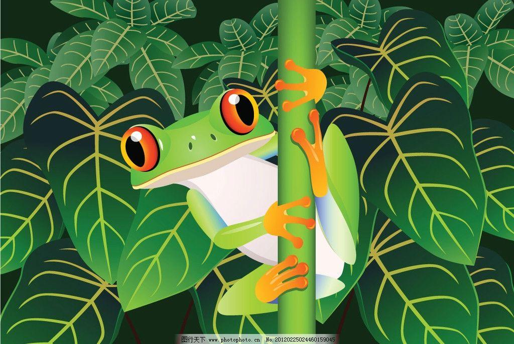 热带雨林中的青蛙图片_野生动物_生物世界_图行天下
