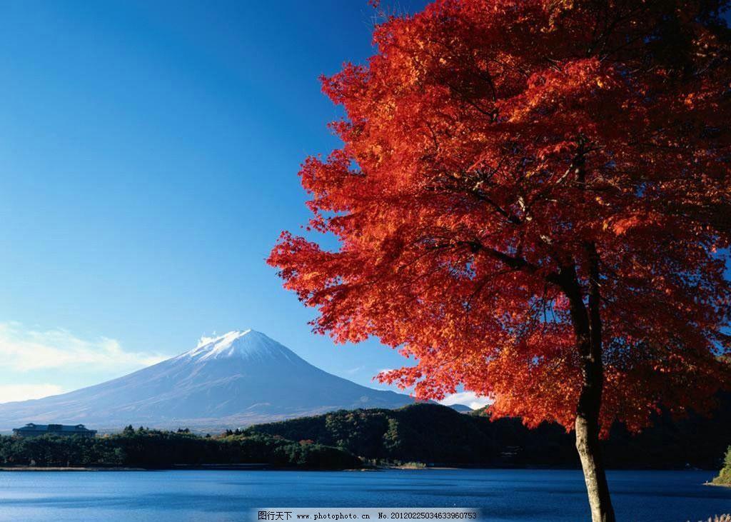 枫树 风景 摄影