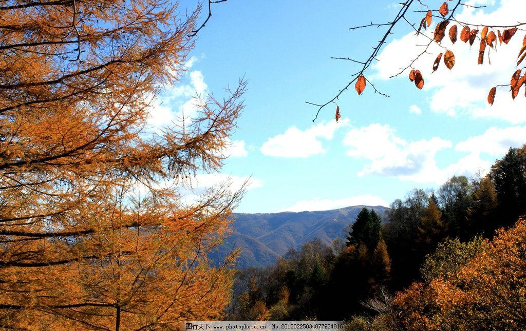 高山 树林 山林 山脉 群山 秋天 金秋 蓝天白云 生态 自然 自然风景