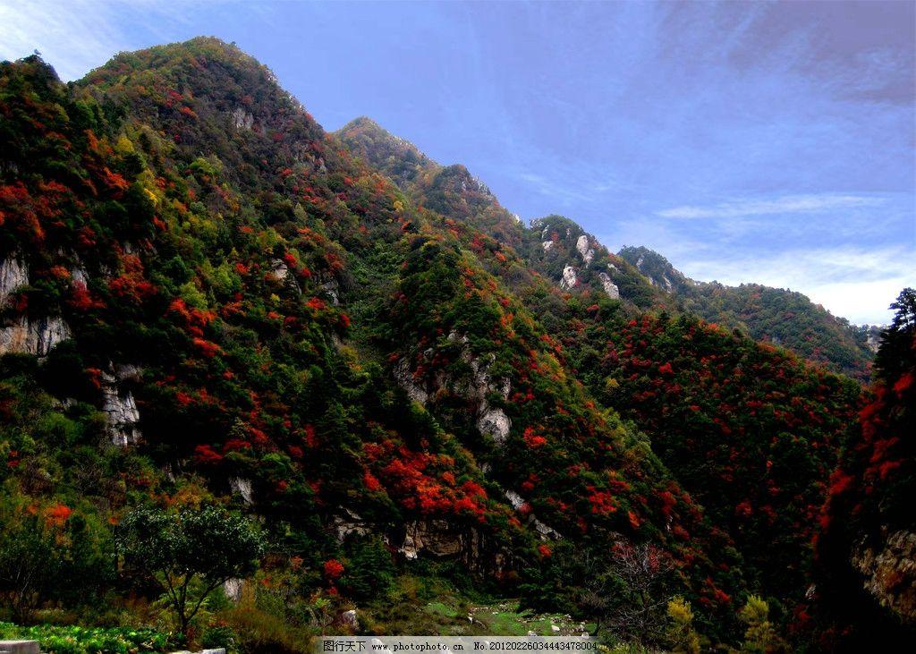 秦岭红叶 大山 红叶 秋色 蓝天白云 深山风景 山水风景 自然景观 摄影