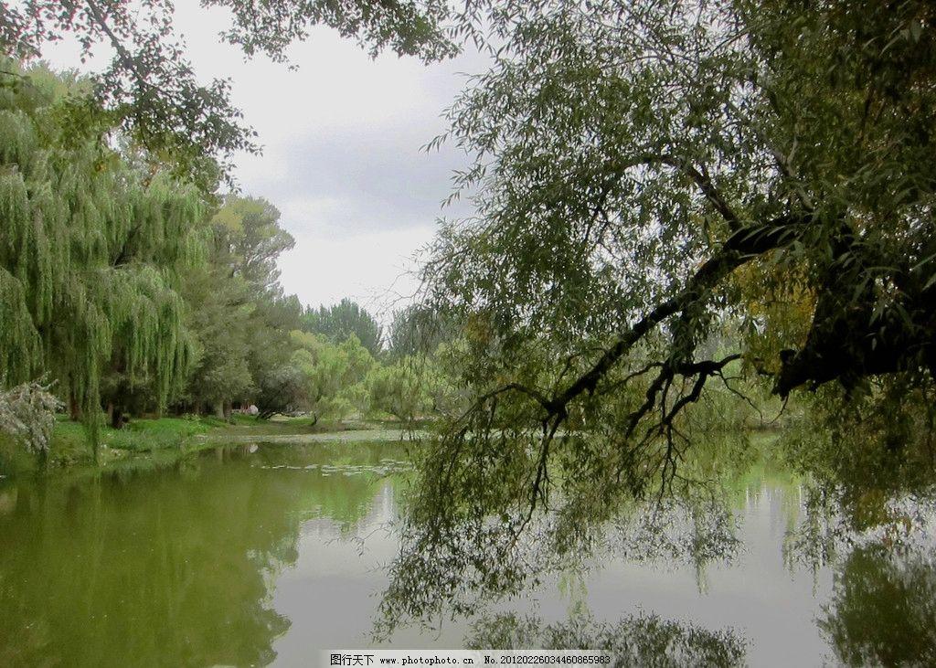 公园 湖水 公园一角 柳树 绿色公园 蓝天白云 山水风景 自然景观 摄影