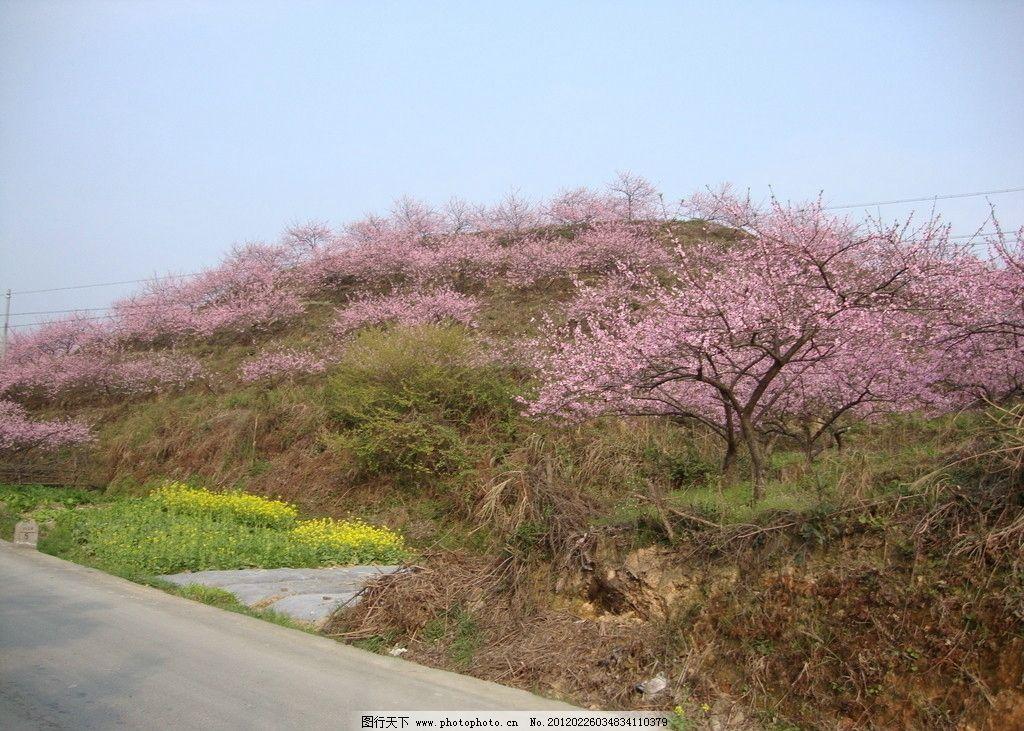 桃园 粉桃花 桃花树 山峦 自然风景 自然景观 摄影 72dpi jpg