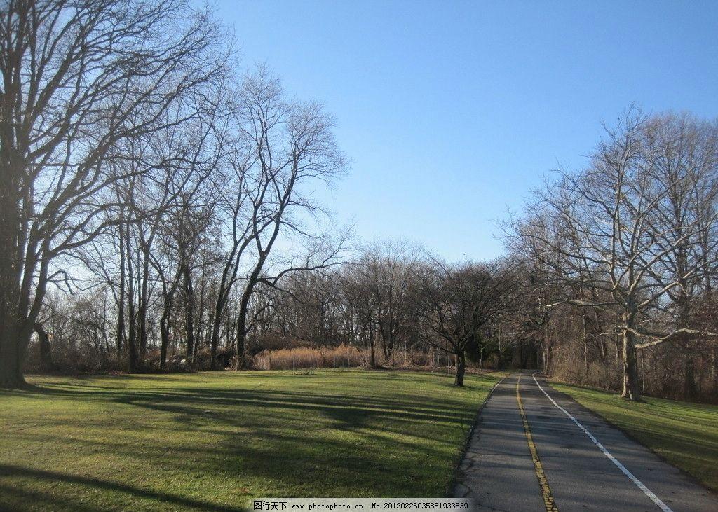 林间小路 道路 街道 树木 树林 植物 枯树 蓝天 草地 绿地 阴影 树荫
