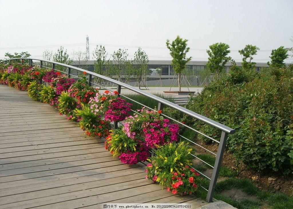辰山植物园 松江辰山 植物园 盆景 绿树 木桥 自然风景 旅游摄影 摄影