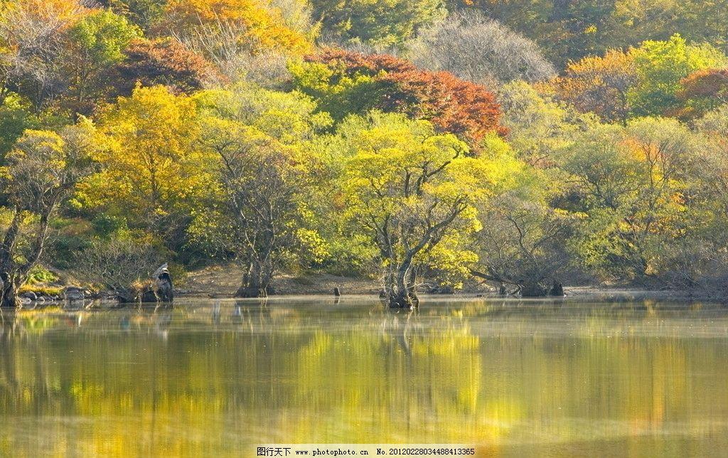 丛林之美 山水 绿树 碧水 倒影 桌面 屏保 背景 风景 山水风景 自然